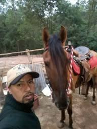 Vendo ou troca cavalo magolino 5 anos marcha picada