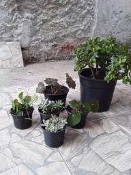 Plantas - Jadi e outras