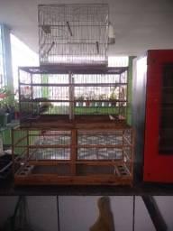 Gaiolas para pássaro