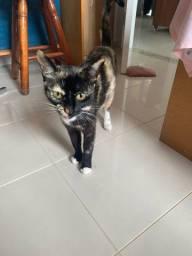Doação de gata fêmea castrada