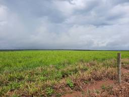 Fazenda 3.823 há (790 alq) dupla aptidão pronta para o Agronegócio
