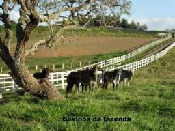 Fazenda 51 alqueires - Vale do Paraíba