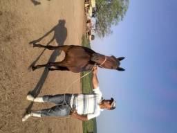 Lote de animais (cavalo égua potro potra)