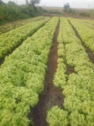 Hortaliças e fruticultura