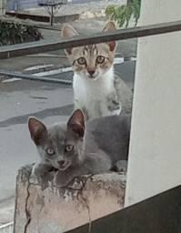 Adoção responsavel dois filhotes de gato