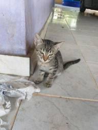 Doa-se gatinhos