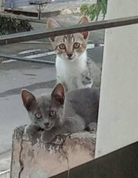 Adoção responsavel de dois filhotes de gato