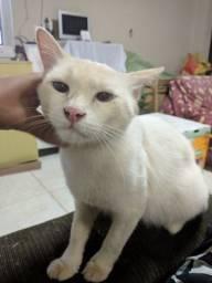 Doa-se Gato Branco. Doação responsável.