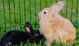 Vende coelhos