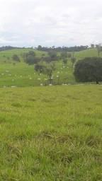 Fazenda de 270 alqueires em Barra do Garças MT