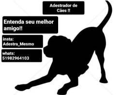 """Adestrador de cães / """"psicologo canino"""""""