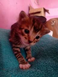 Doando gatinho