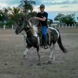 Cavalo Paint horse