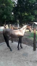 Vendedor cavalo manga largar