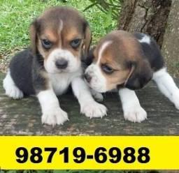 Canil Excelência Filhotes Cães BH Beagle Poodle Yorkshire Maltês Basset Pug Shihtzu Lulu