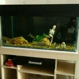 Troco aquário leia o anúncio