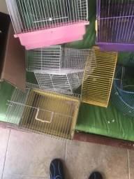 Rodas roedores