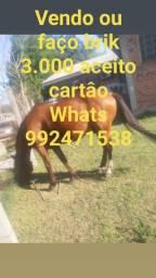 Cavalo crioulo 6 anos