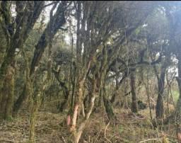 Lindo terreno em Urubici . ( Serra)