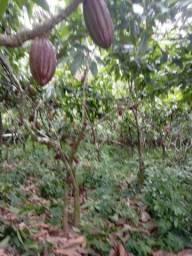 Vendo ilha na linha de povoacao 11,5 hectares