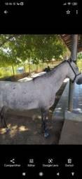 Vendo um cavalo manga larga