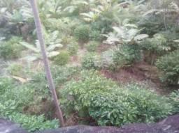 Terreno 10.000 M2 em Boa Vista Cariacica