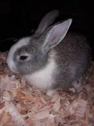 Vendo ou troco filhotes de coelhos