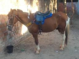 Vendo cavalo pacato