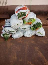 Vende se milho verde atacado e varejo