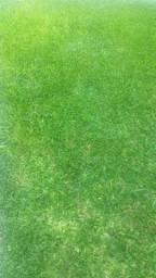 Serviço de cortar grama a partir de 60Reais