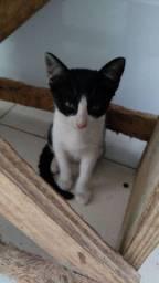 Gato, Gatinho,  doação,  Adoção