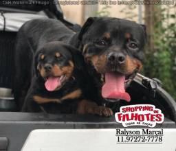 Rottweiler Cabeça de Touro, 15 clinicas e oferecemos suporte veterinário 24hrs