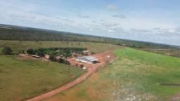 Fazenda de 783 alqueires região de Pedro Afonso TO