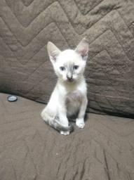 Gatos filhotes para doação!