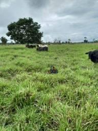 Fazenda à venda, por R$ 5.600.000 - Zona Rural - Nova Mamoré/RO