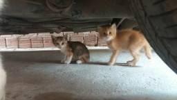 Filhotes de gato.Doação