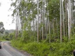 Excelente terreno rural no municipio de Doutor Pedrinho (SC)