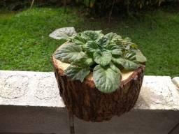 Cachepô em madeira rústica