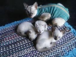 Doacao de gato