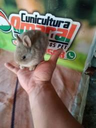 Mini coelho nether