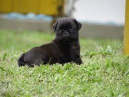 Mini Pug top black