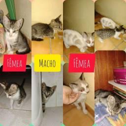 Doação de 3 gatinhos URGENTE