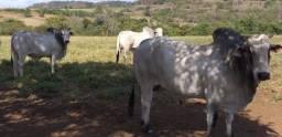 Fazenda 40 Alqueires em Paranaíba - MS