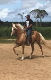 Cavalo manga larga TABU E.A.O( favacho estanho x caiçara de patrocínio)