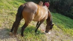 Vendo égua mansa e Boa de traía urgente aceito propostas
