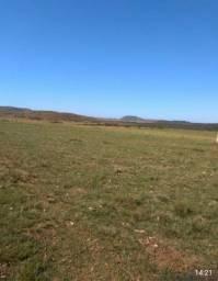 Campo de pecuária