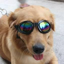 Top Oculos de proteção passeios pet