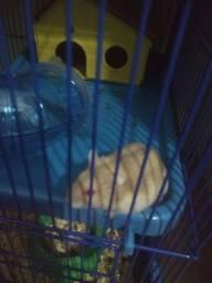 Hamster siberiano