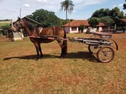 Cavalo mestre em Charrete