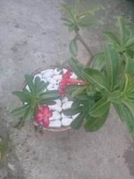 Dp.jardinagem